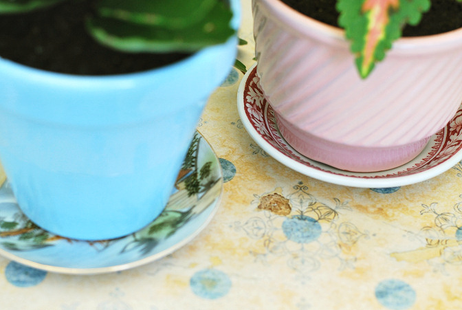 vintage plates as pot saucers